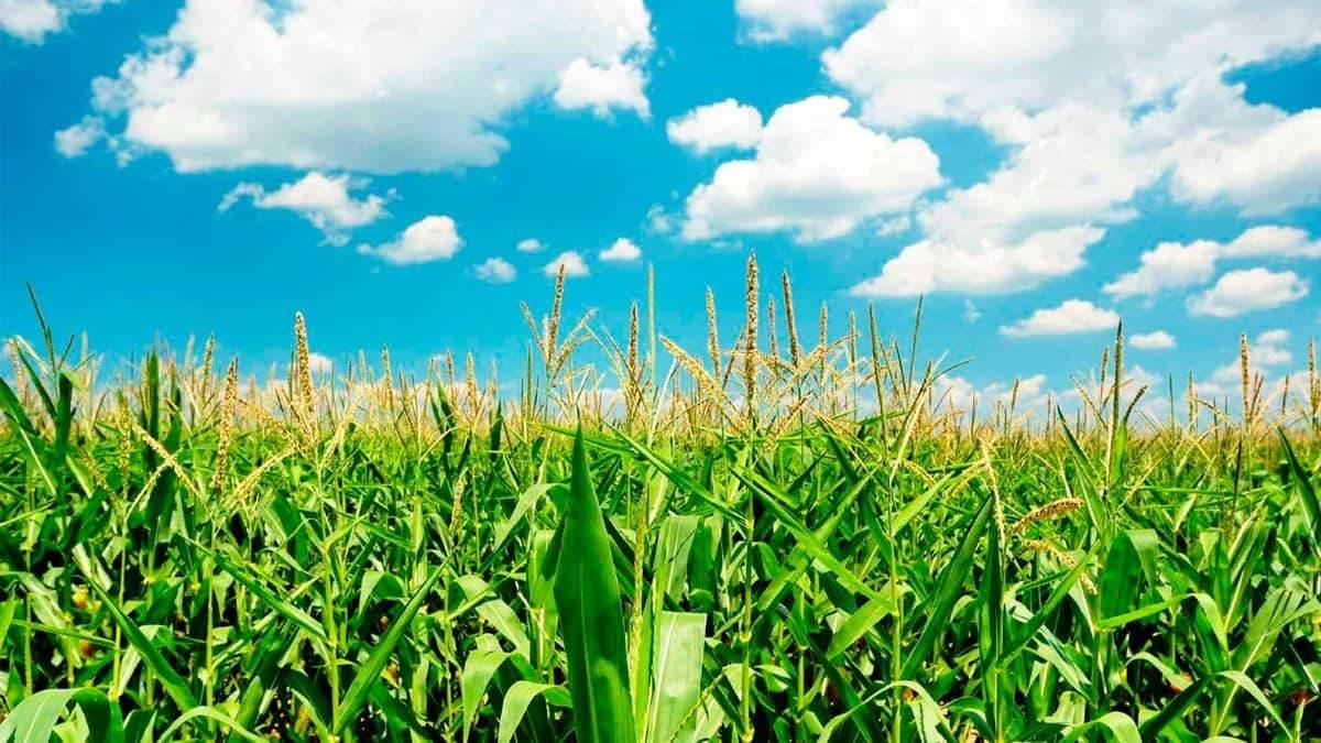 Imagenes de la biomasa