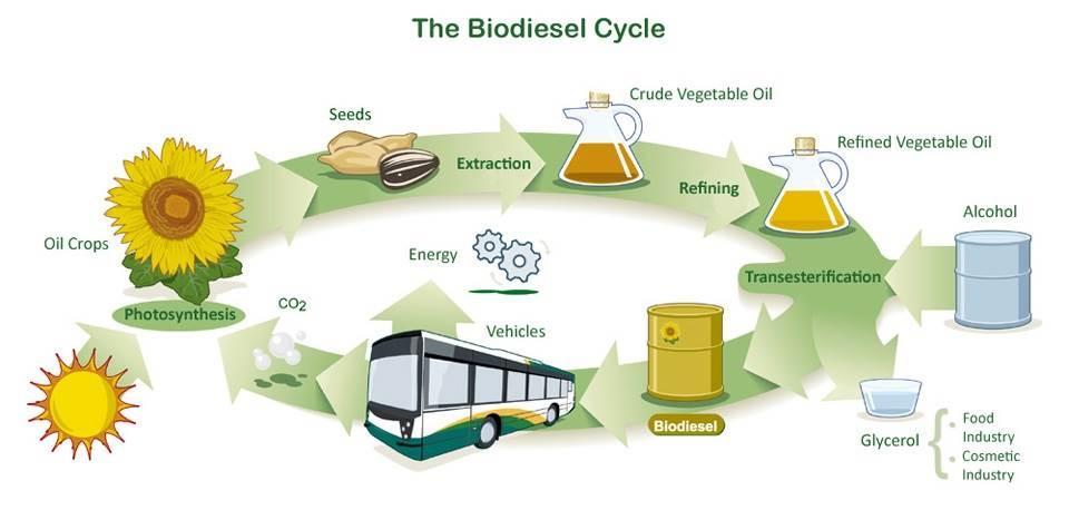 Imagenes de la biomasa 4