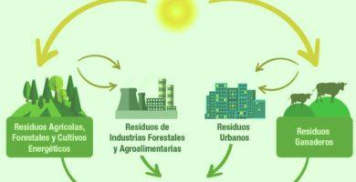 Imagenes de la biomasa 6